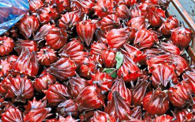 ROSELLE (Hibiscus Sabadariffa)
