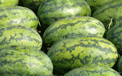 Watermelon (Citrullus Vulgaris)